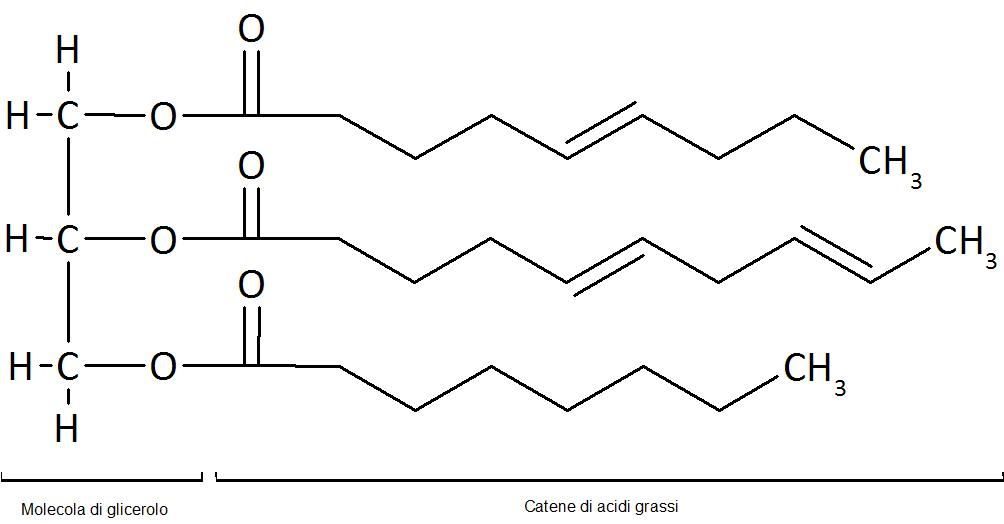 Acidi grassi+glicerolo