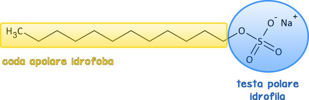 tensioattivo; SLES; SLS; sodio laurilsolfato;
